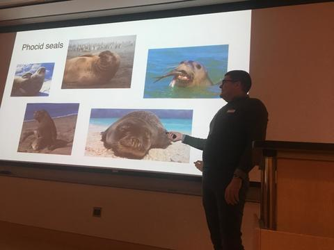 Stephen presents at the Queer in STEM Symposium 2019. On the slide are pictures of Phocid Seals.